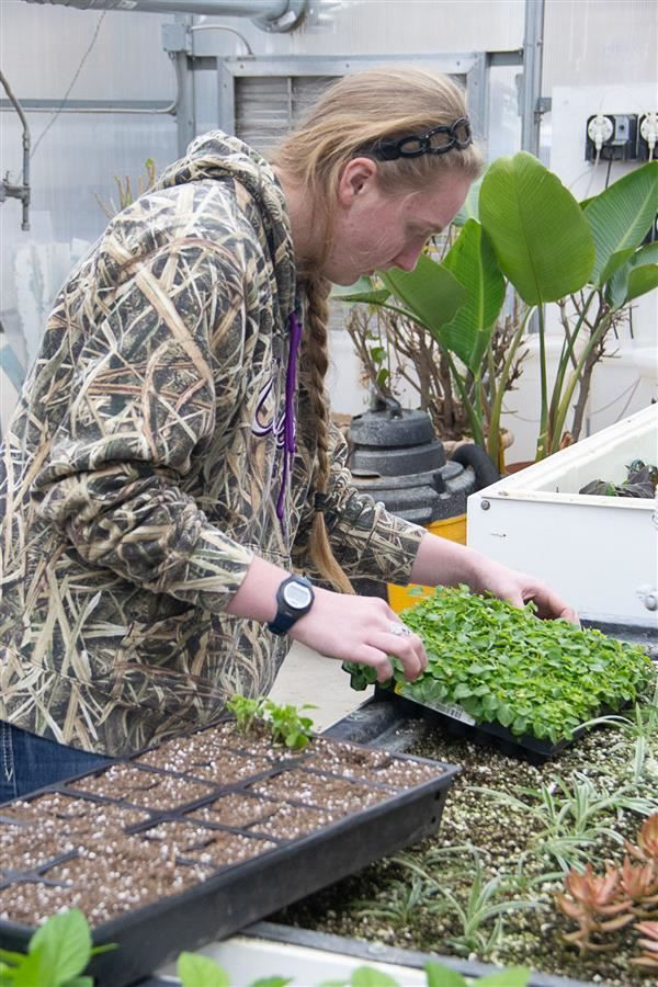 AFSA student working in the greenhouse getting the plant sale ready.